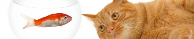 cropped-cats_animals_fish_kittens_white_background_desktop_3200x1200_hd-wallpaper-1188032.jpg